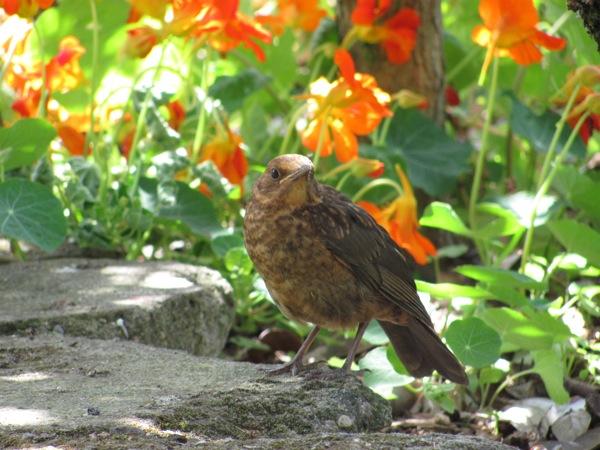 Sustainable Backyard Garden :  garden in the hamilton gardens to promote organic gardening